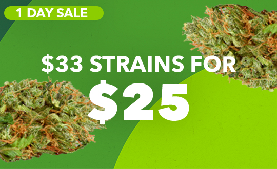 ALL $33 FLOWER NOW $25!