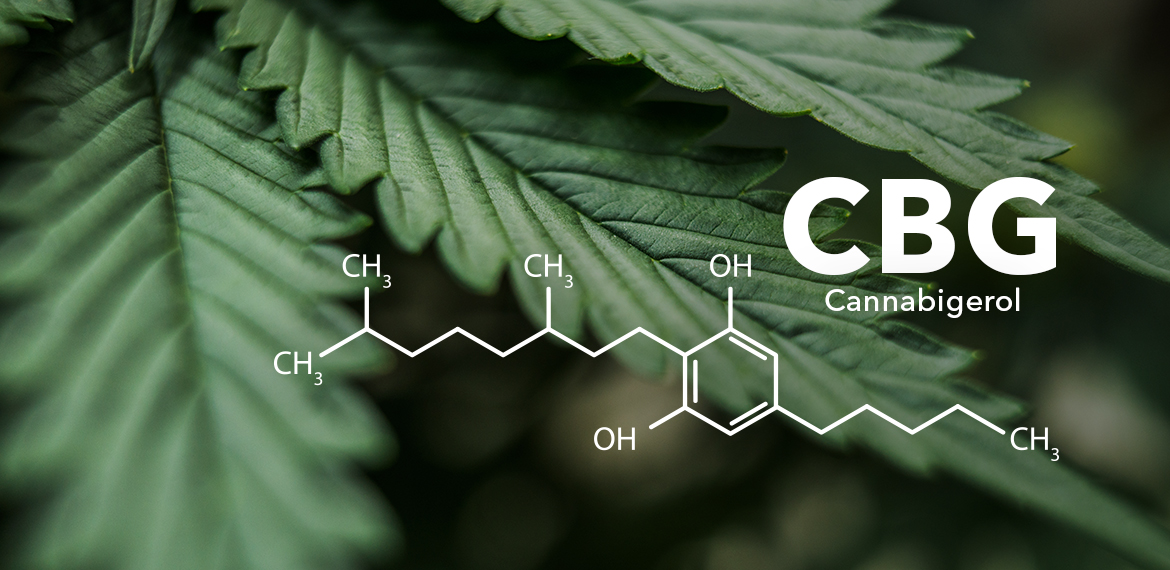 Picture of marijuana leaves with the molecular structure of CBG, a cannabinoid, overlaid on the image